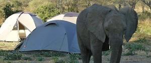Budget-Camping-11
