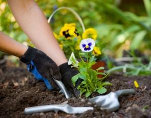 Canadian-gardeners-flowers